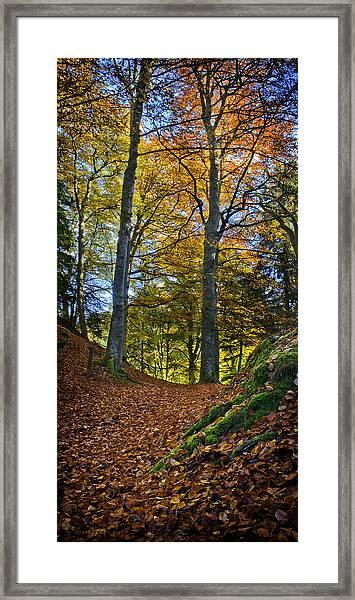 Red Carpet In Reelig Glen During Autumn Framed Print