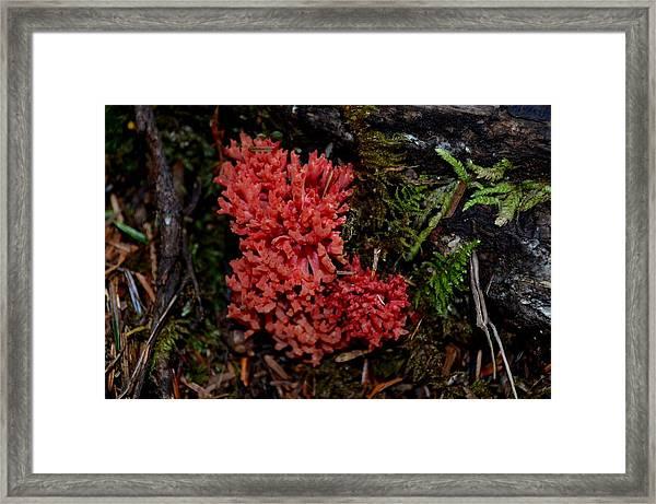 Red Coral Mushroom Framed Print