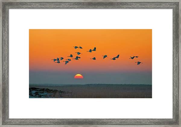 Red-crowned Crane Framed Print