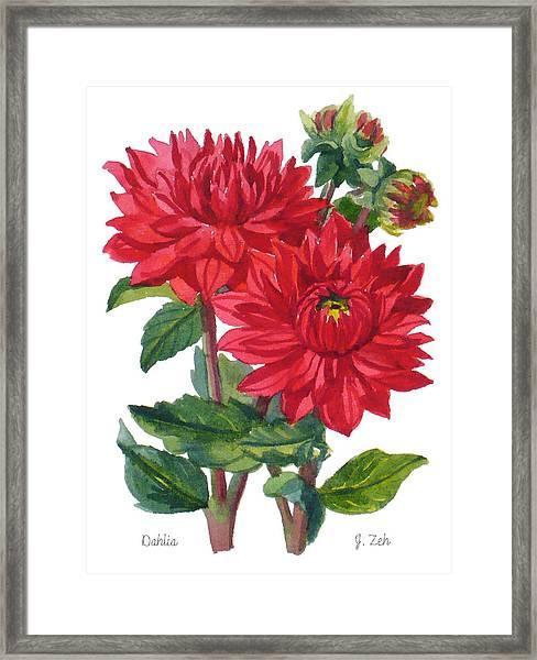 Red Dahlias Framed Print