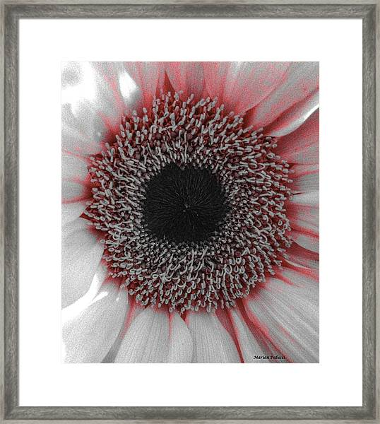 Red Delight Framed Print