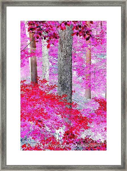 Red Forest Framed Print by JCYoung MacroXscape