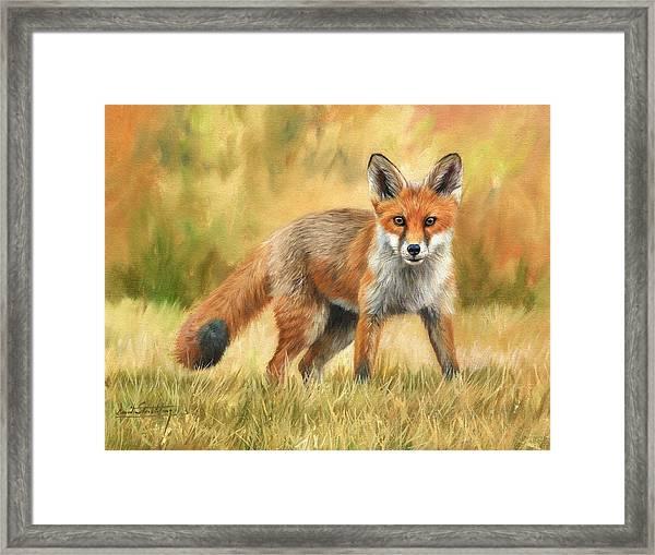 Red Fox Framed Print