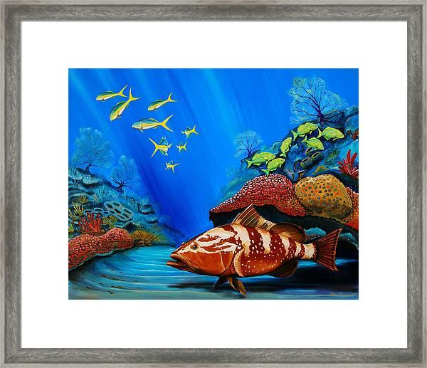 Red Grouper Framed Print