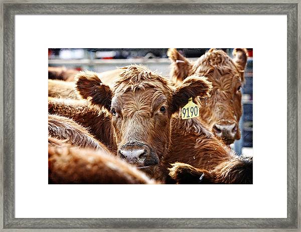 Red Heads On The Ranch Framed Print