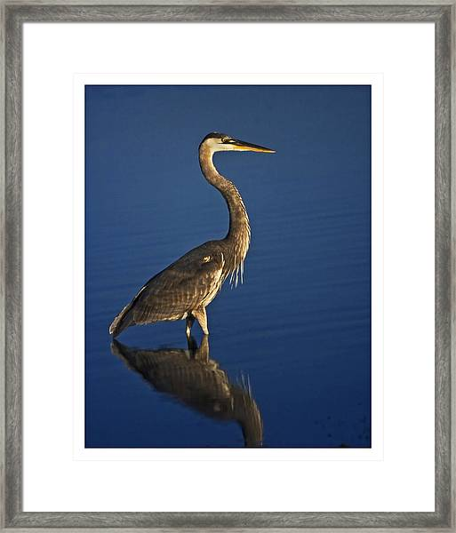 Red Heron Wading Framed Print