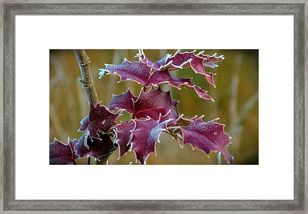 Red In Rime Framed Print
