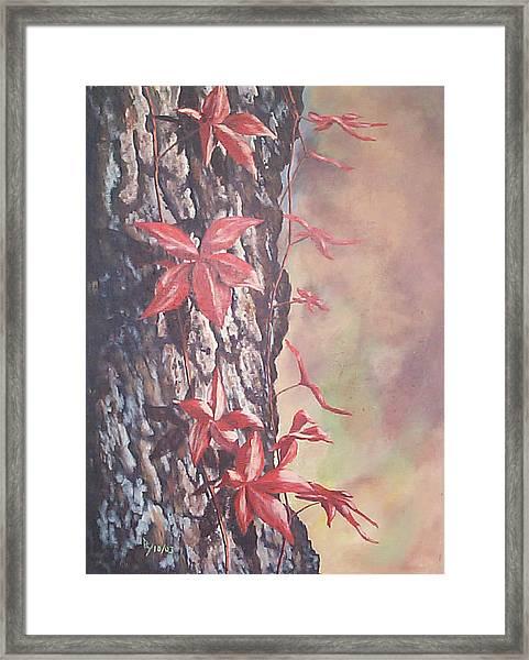 Red Ivy Framed Print
