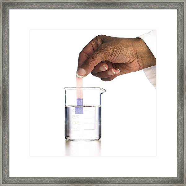 Red Litmus Paper In Alkali Framed Print by Science Photo Library