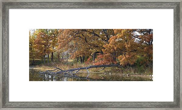 Red Oaks On The Shore Framed Print