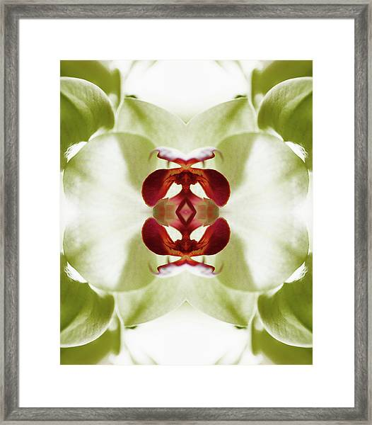 Red Orchid Framed Print by Silvia Otte