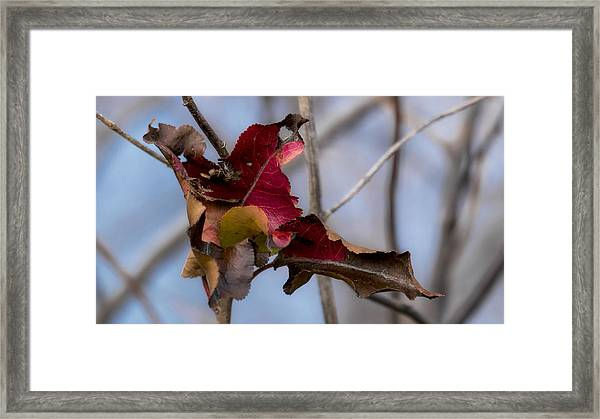 Red Over Branch Framed Print