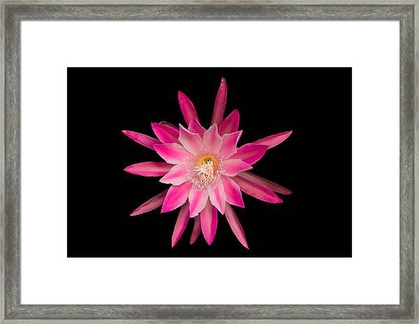 Red Petals In The Morning Framed Print