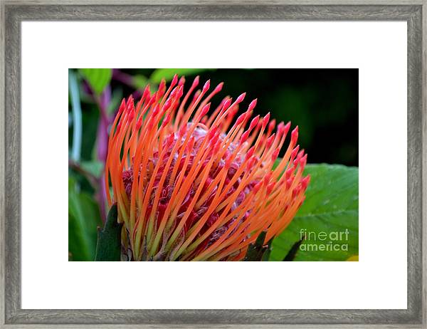 Red Pin Cushion Framed Print
