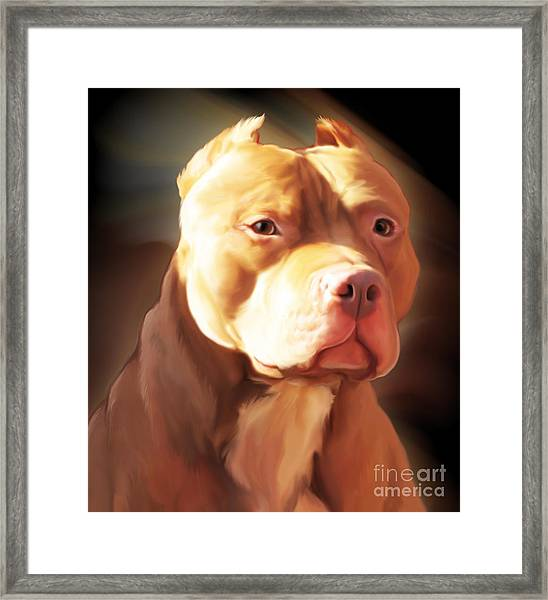 Red Pit Bull By Spano Framed Print
