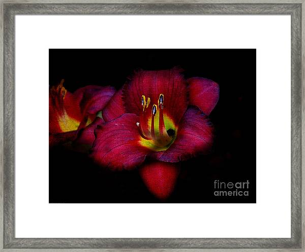 Red Red Lily Framed Print