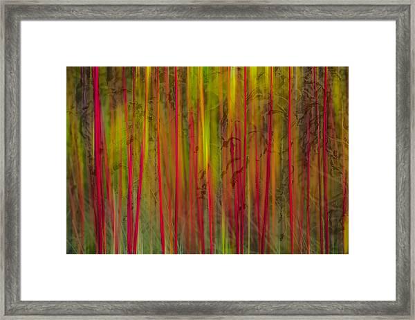 Red Reed Framed Print