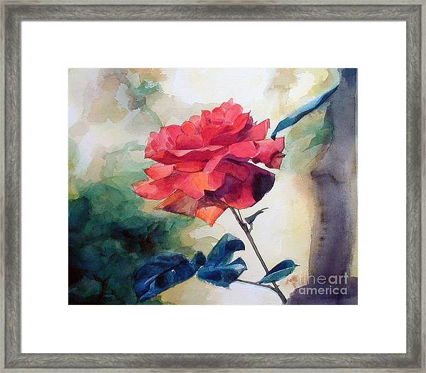 Watercolor Of A Single Red Rose On A Branch Framed Print