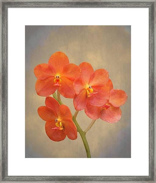 Red Scarlet Orchid On Grunge Framed Print