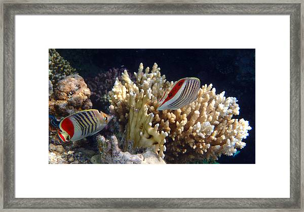 Red Sea Beauty 2 Framed Print