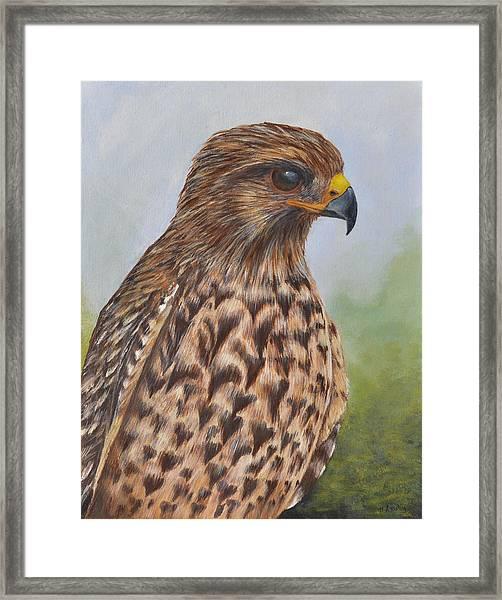 Red Shouldered Hawk Framed Print