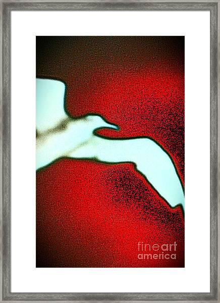 Red Sky Seagull Framed Print
