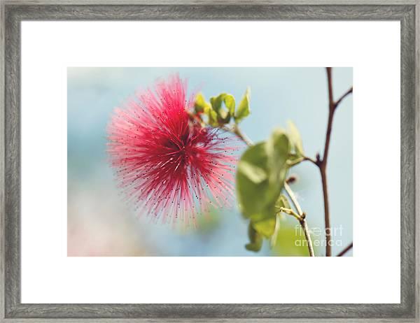 Red Sparkle Framed Print