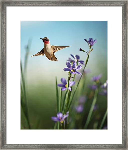 Red Throat Framed Print
