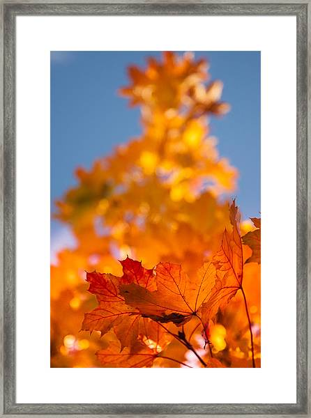 Red Tipped Gold Framed Print