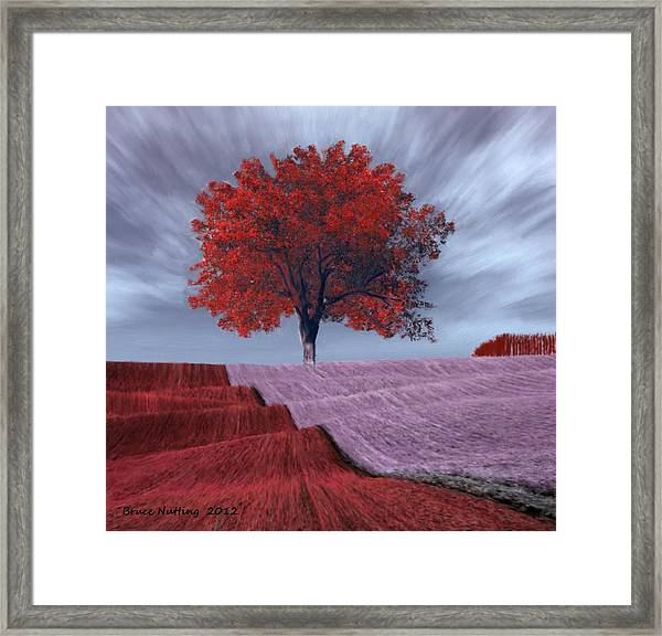 Red Tree In A Field Framed Print
