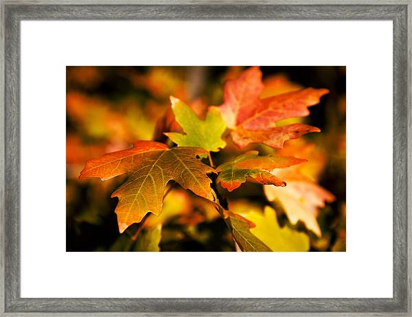 Reds Framed Print