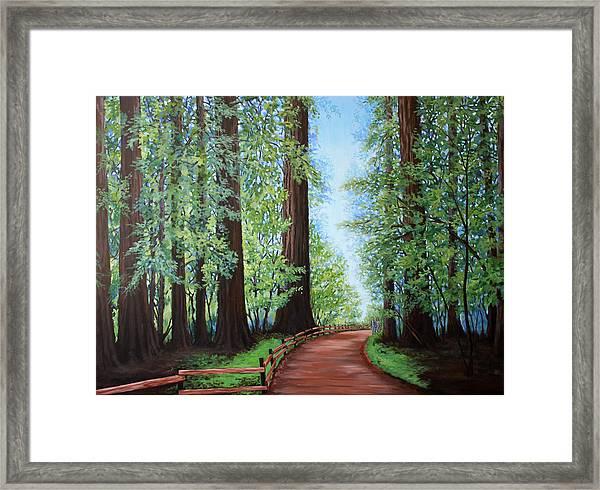 Redwood Forest Path Framed Print