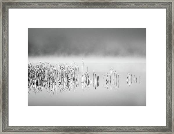 Reed In Fog Framed Print by Benny Pettersson
