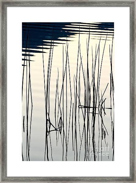 Reeds II Framed Print