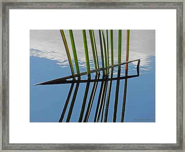 Reeds In Wetlands Framed Print