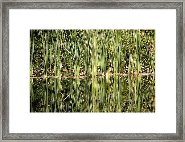 Reeds Of Reflection Framed Print