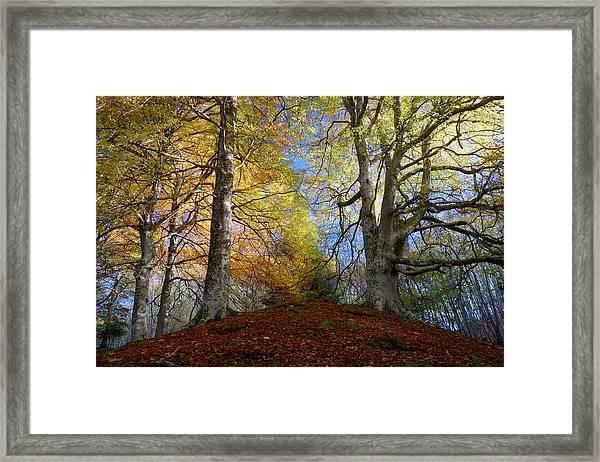 Reelig Forest  Framed Print