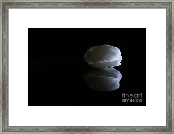 Reflected Tulip Framed Print