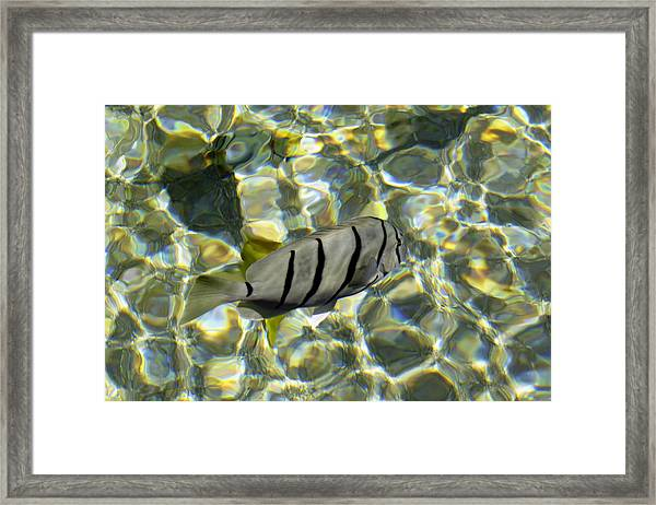 Framed Print featuring the photograph Reflection Fish by Bob Slitzan