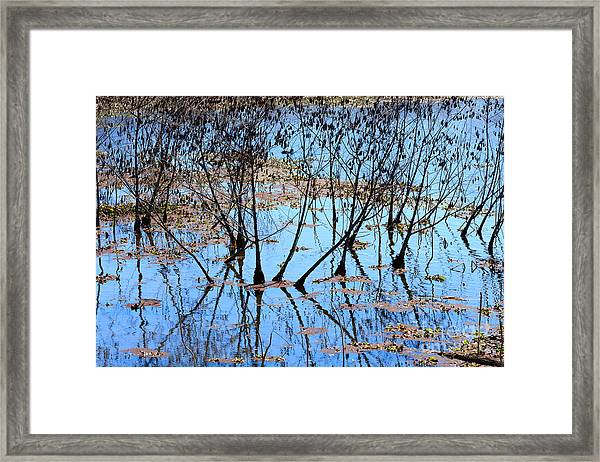 Reflections And Silhouetted Trees Framed Print