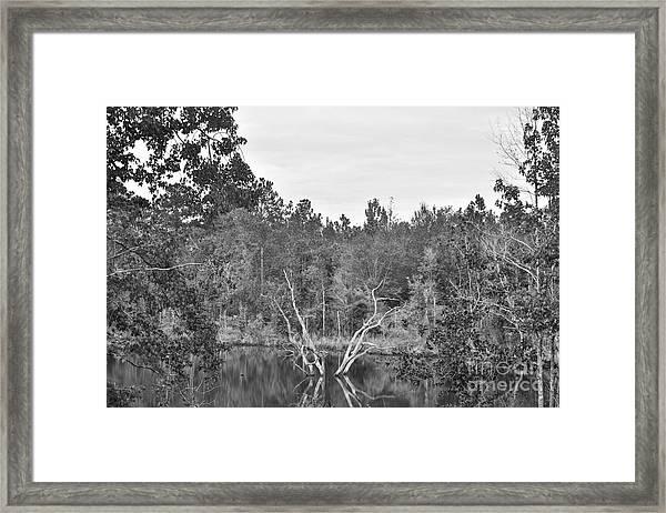 Reflections Framed Print by Mina Isaac