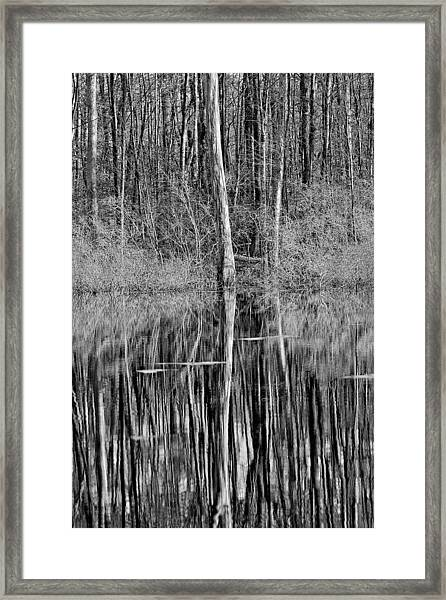 Reflections Of A Swamp Framed Print