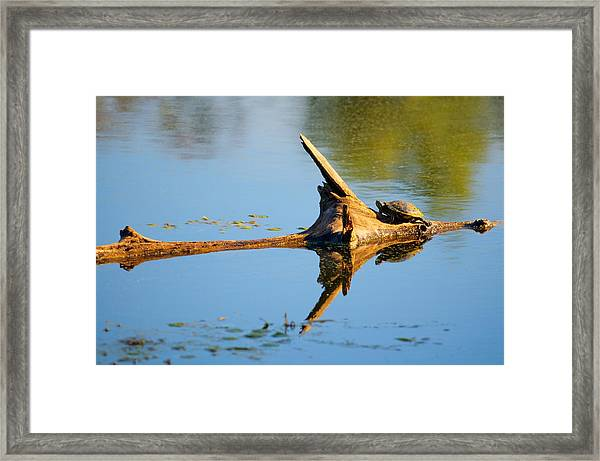 Reflections Of Tortuga Framed Print