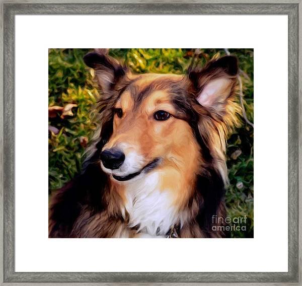 Regal Shelter Dog Framed Print