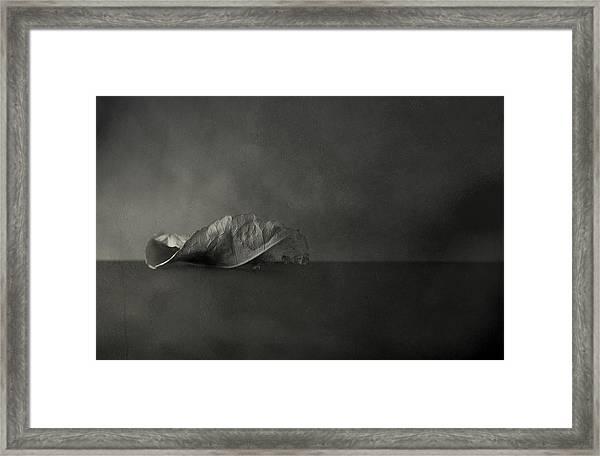 Reincarnate Framed Print