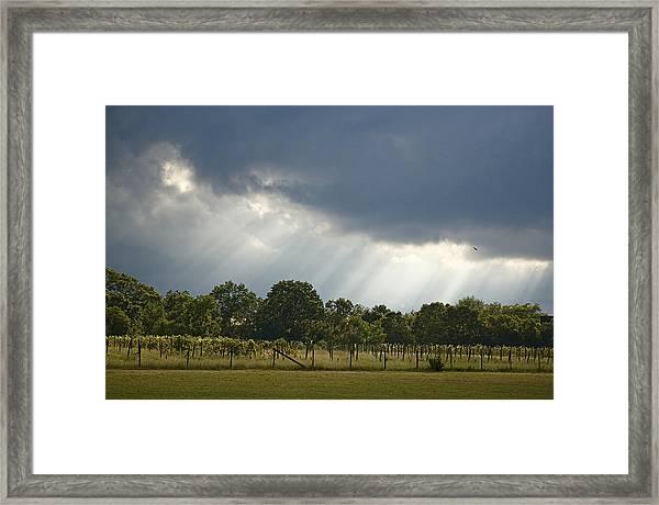 Renault Vineyards Framed Print