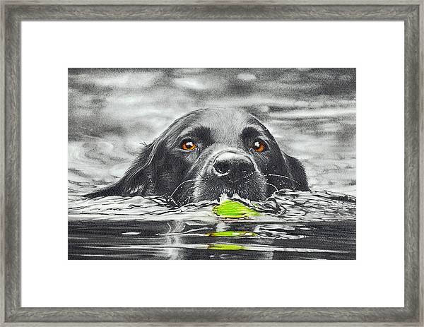 Reservoir Dog Framed Print