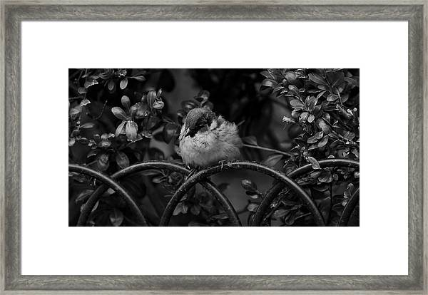 Rest For The Weary Framed Print