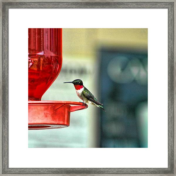 Framed Print featuring the photograph Resting by David Armstrong