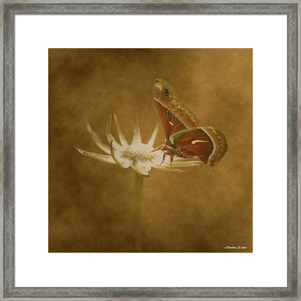 Resting Moth Framed Print